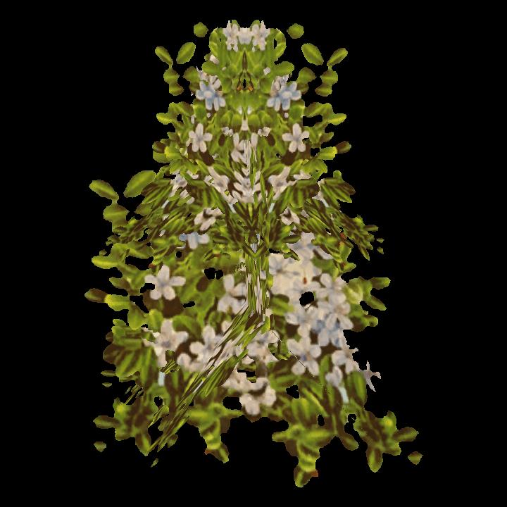 Wildstahlblume