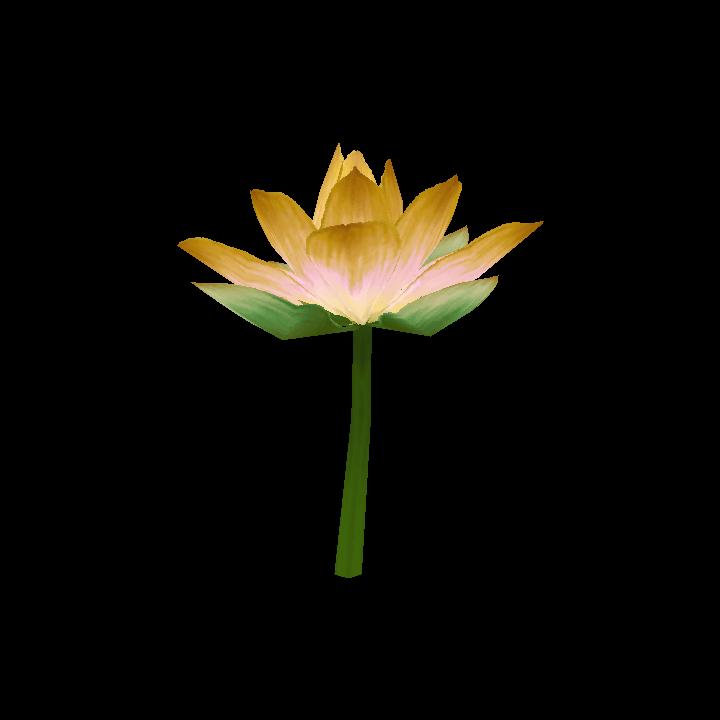 Goldlotus